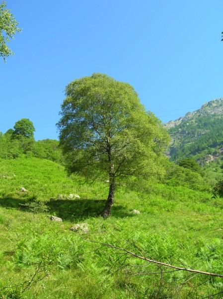 Trees Symbolize Spiritual Growth