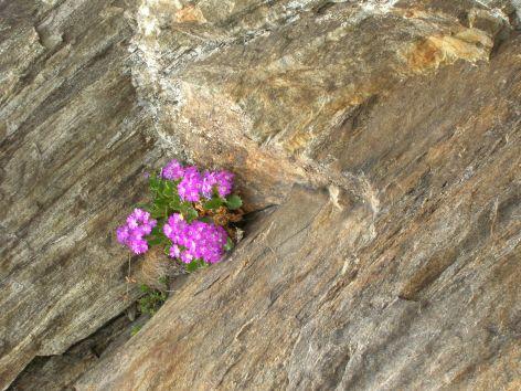 Flowers growing between rocks. Photo by Debra Moffitt.
