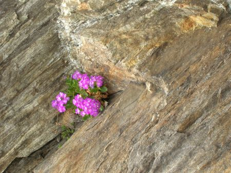 Flowers growing in rock by Debra Moffitt