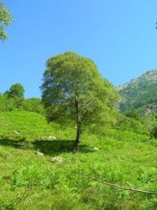 val verzasca perfect tree